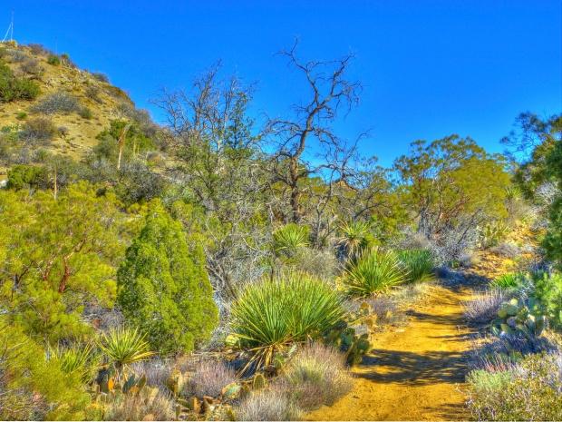 Cactus Spring Trail