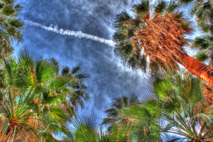 looking-up-at-palm-trees-streak-in-sky