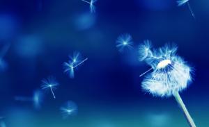 Blue-Bkgrnd-with-Dandelion