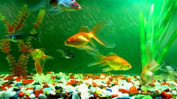 fish-aquarium-5.jpg